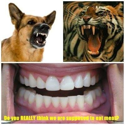 Tiger Teeth