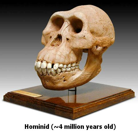 Hominid 4 Million Years Old
